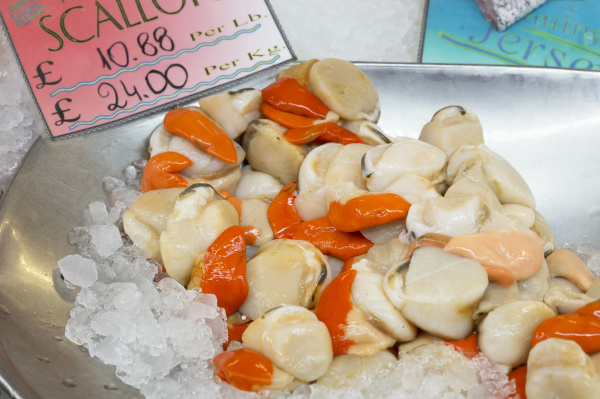 fresh scallops at a market