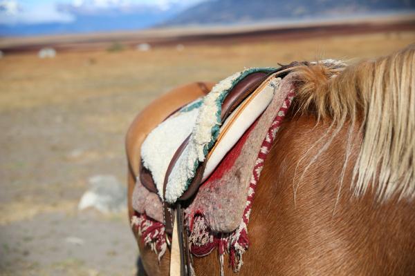 closeup of horse saddle in patagonian