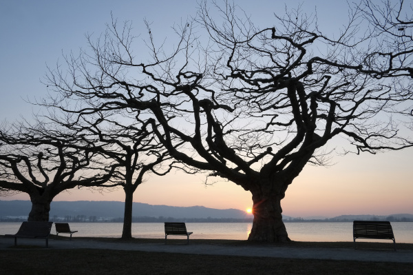 germany lake constance benches and trees