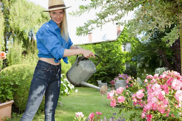 mid adult woman watering rose bush