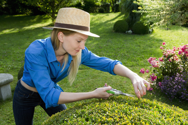 mid adult woman pruning perfect hedge