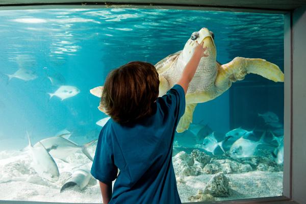 boy reaching towards sea turtle in