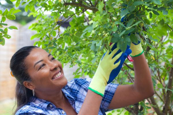 smiling mature woman pruning rose bush