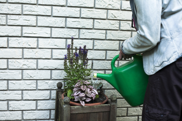 cropped shot of mature woman watering