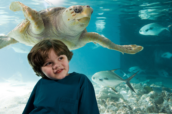 boy in front of sea turtle
