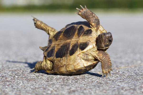 tortoise on road