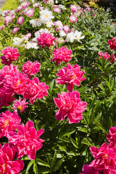 colorful flowers growing in garden