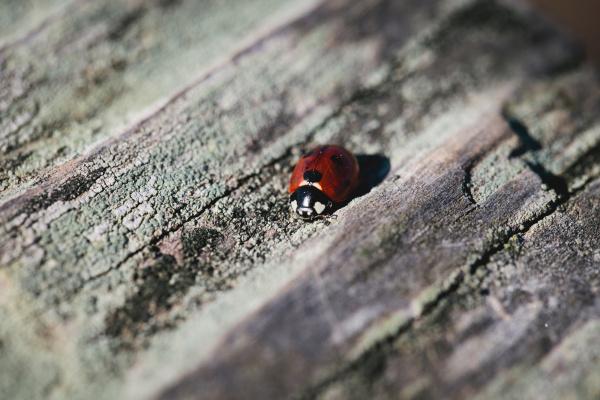 close up of ladybug on log