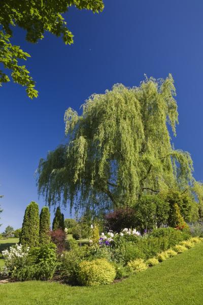 garden lawn and border with spiraea