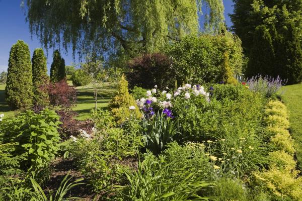 garden border with spiraea japonica gold