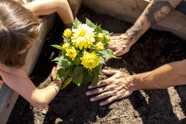 hands of girl and father planting