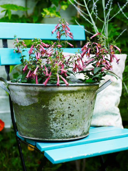 garden plant with pink flowers in