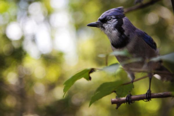 brown bird perching on a tree
