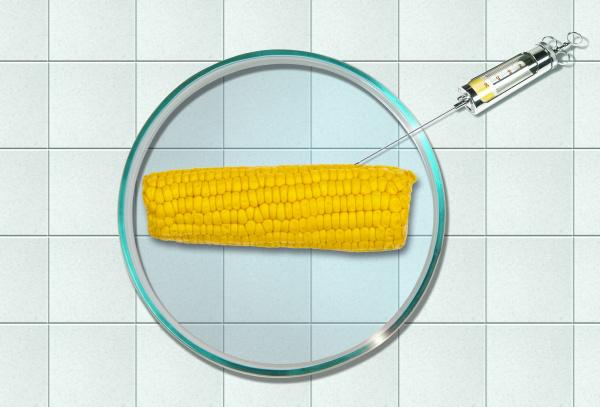 corn cob in petri dish injection