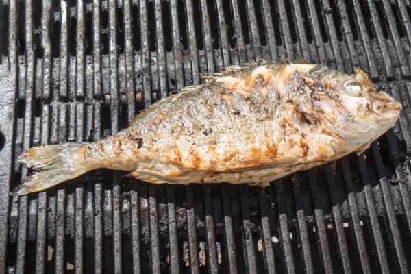 fish sea bream on bardecue