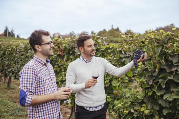 two men in a vineyard checking