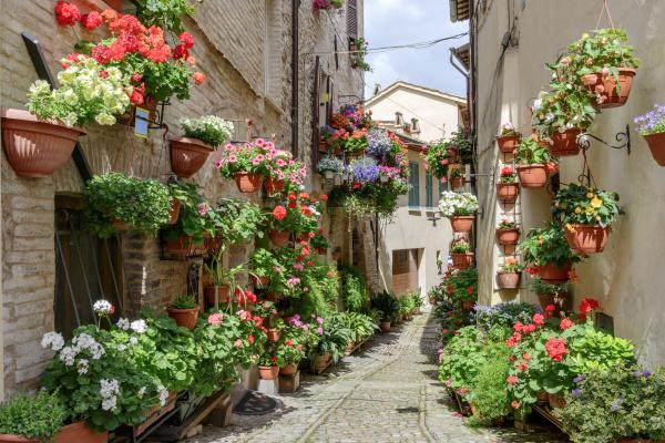 flowers in side street spello