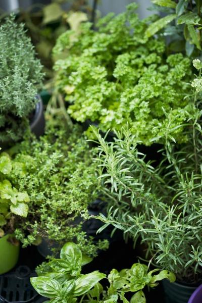 various fresh herbs in a flower