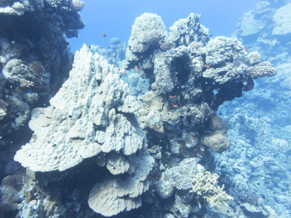 coral reef at the bottom of