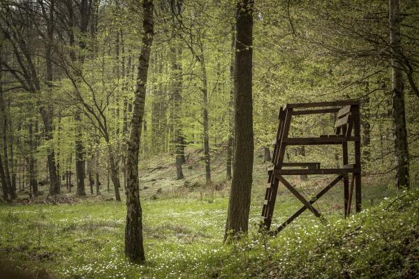 germany brandenburg flaeming heath