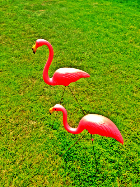 pink flamingos on lawn