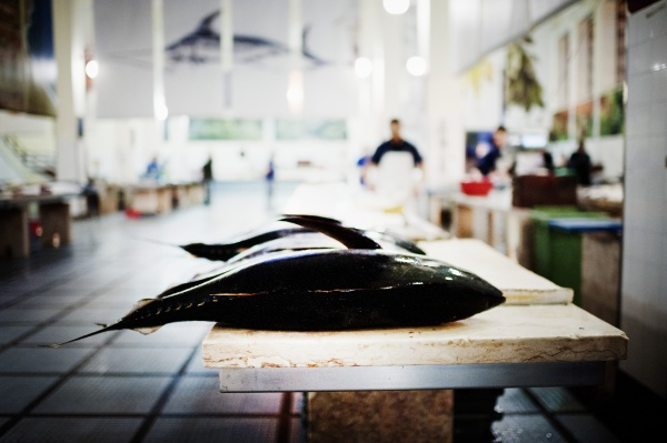 fresh tuna fish on the fish