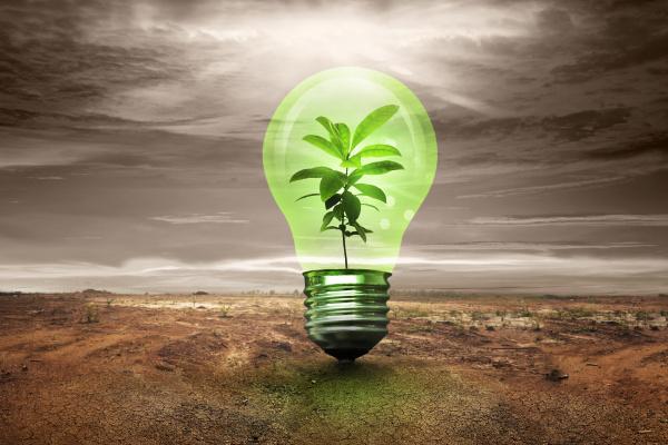 small plant inside light bulb in
