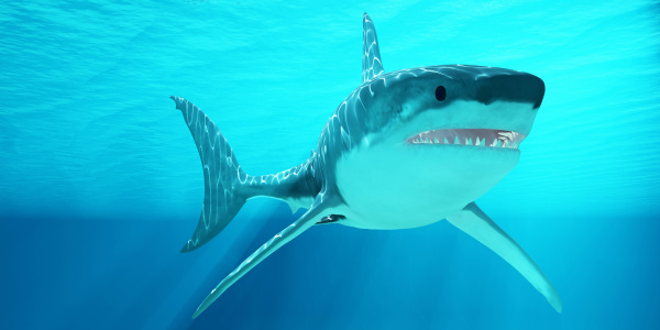 great white shark with sunrays