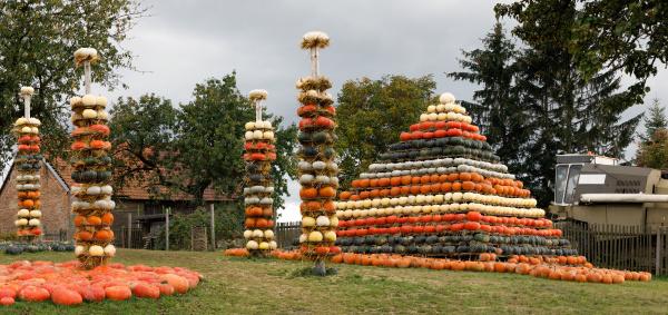 autumn harvested pumpkins arranged for fun