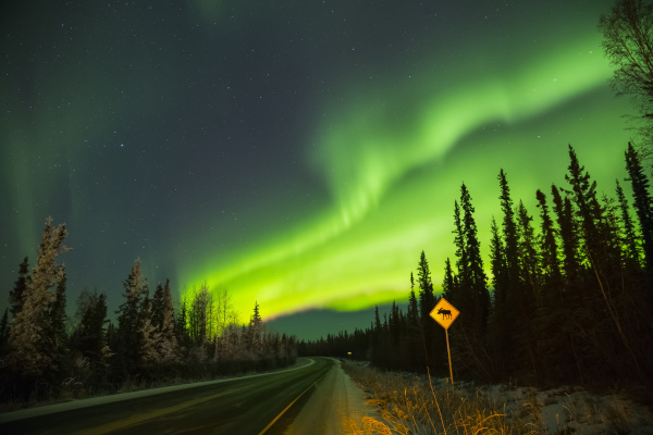 the aurora glows over a moose