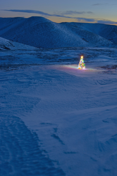 lit christmas tree at twilight outside