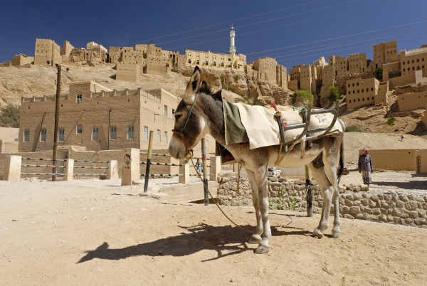 donkeys in the old town of