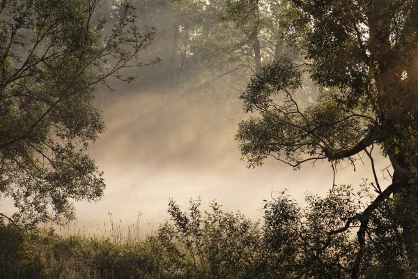 morning fog over the river pfreimd