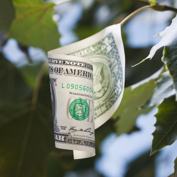 american currency growing on tree