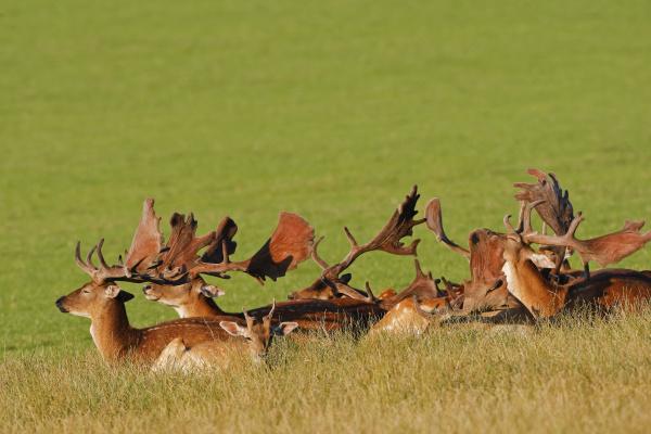 animal mammal fauna animals lie lying