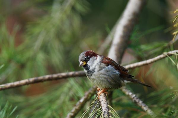 tree trees animal bird fauna animals