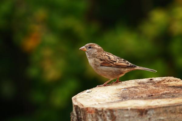 animal bird fauna animals birds sparrow