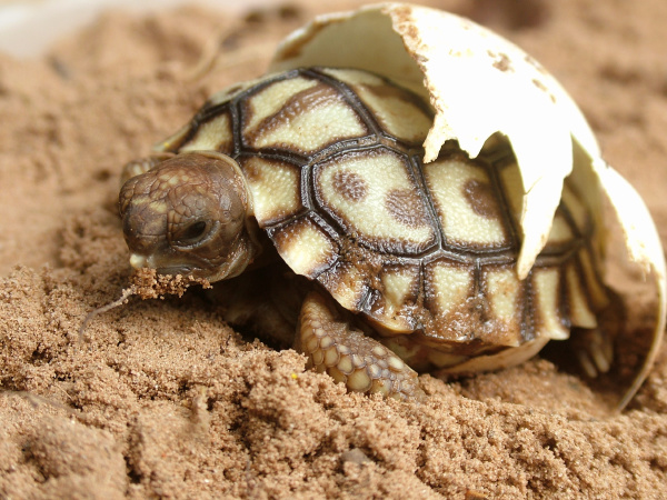 born animal reptile fauna animals radio