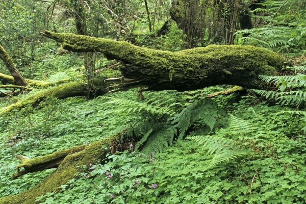 jungle on the island of gomera