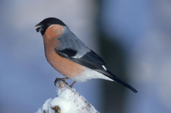 winter animal bird fauna animals birds