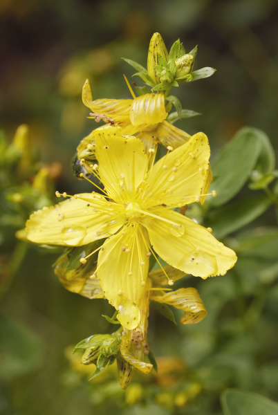 detail closeup bloom blossom flourish flourishing