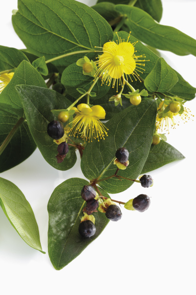 inside indoor photo medicinally medical bloom