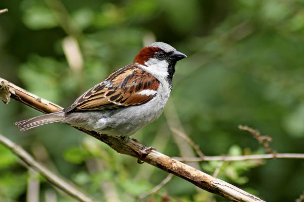 animal bird fauna animals birds european