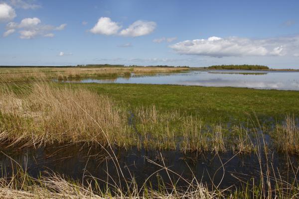 landscape in the lauwersmeer national park