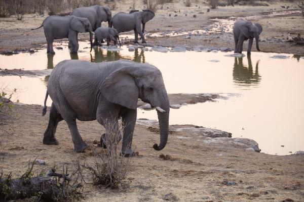 africa namibia etosha national park african