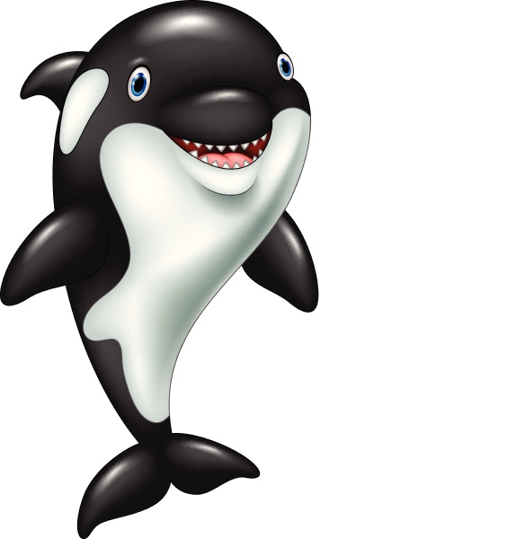 cartoon funny killer whale standing