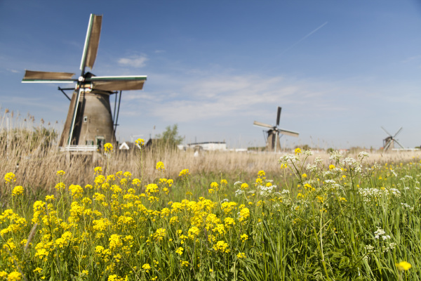 windmill kinderdijk in netherlands
