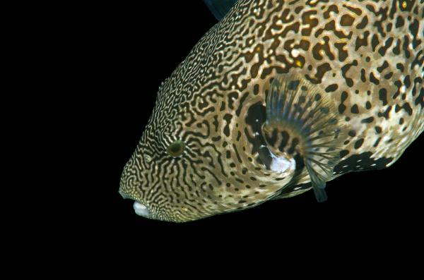 closeup animal asia animals portrait fish