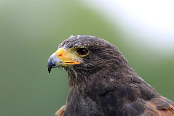 detail closeup animal bird fauna animals