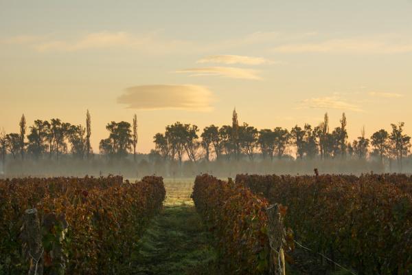 autumn fog highlights the sunrise over